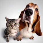 pet allergy testing Elyria Lorain County Xcell Medical Group