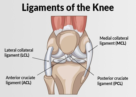 diagram of the ligaments in knee acl and mcl